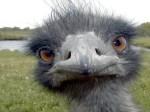 emu-456